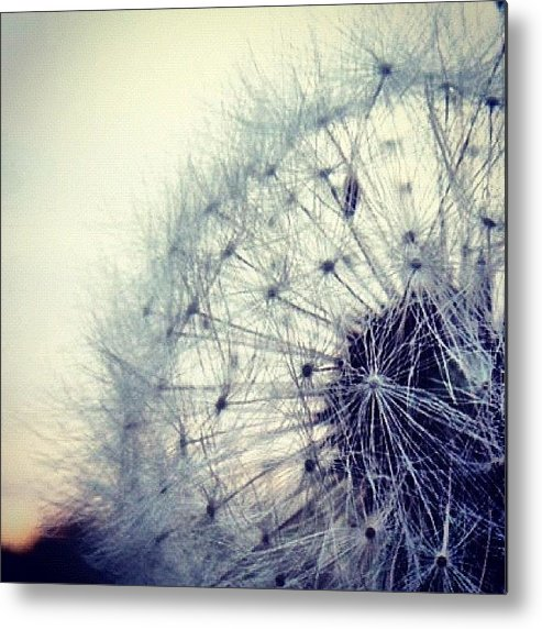 Life Metal Print featuring the photograph #mgmarts #dandelion #love #micro by Marianna Mills