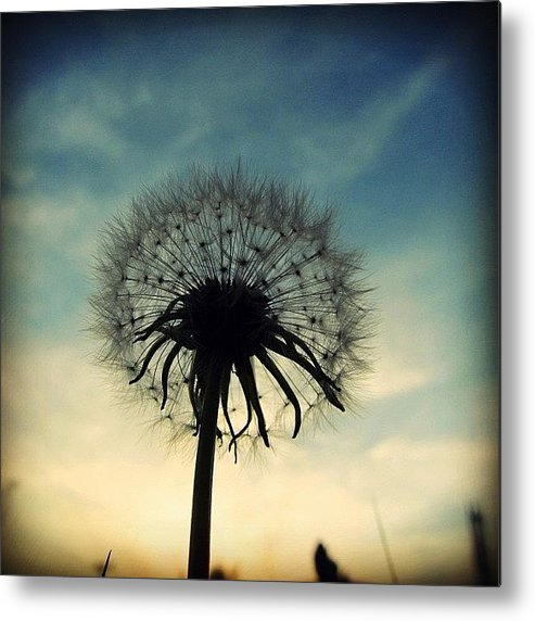 Life Metal Print featuring the photograph #mgmarts #dandelion #weed #sunset #sun by Marianna Mills