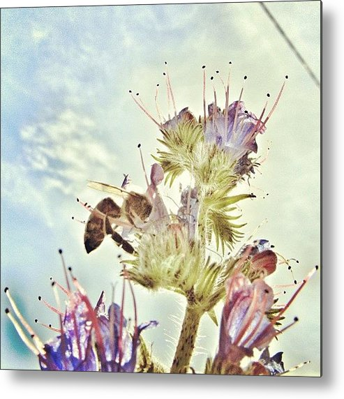 Summer Metal Print featuring the photograph #mgmarts #flower #spring #summer #bee by Marianna Mills