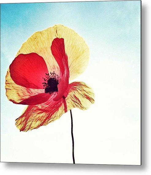 Europe Metal Print featuring the photograph #mgmarts #poppy #nature #red #hungary by Marianna Mills