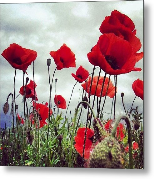 Life Metal Print featuring the photograph #mgmarts #poppy #weed #flower #spring by Marianna Mills
