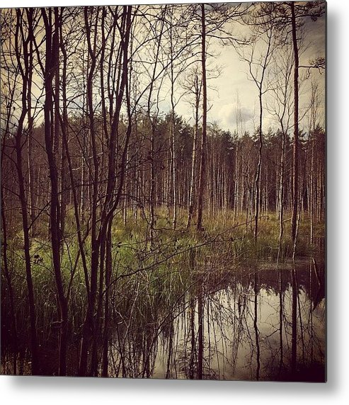 Autumn Metal Print featuring the photograph Autumn in the Woods by Illusorium Illustration