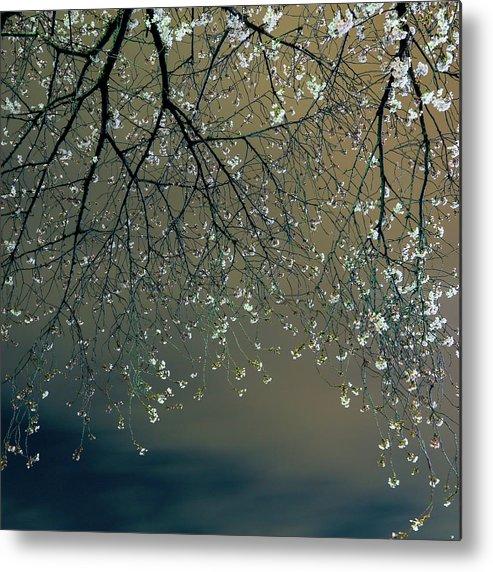 Tranquility Metal Print featuring the photograph Sakura 2013 2 by Aquirae