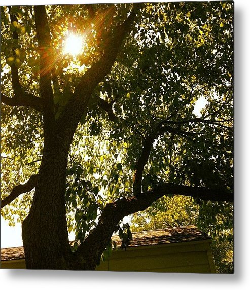 Tree Metal Print featuring the photograph Sunshine by Christy Beckwith