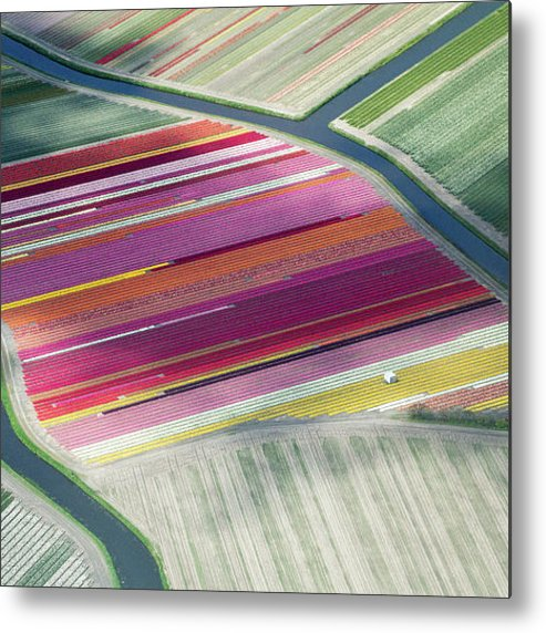 Curve Metal Print featuring the photograph Tulip Fields, Aerial View, South by Frans Sellies