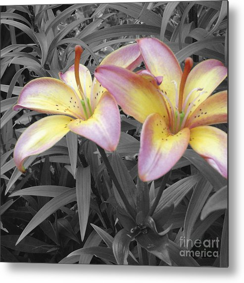 Lilies Metal Print featuring the photograph Two Lilies by Stephen Prestek