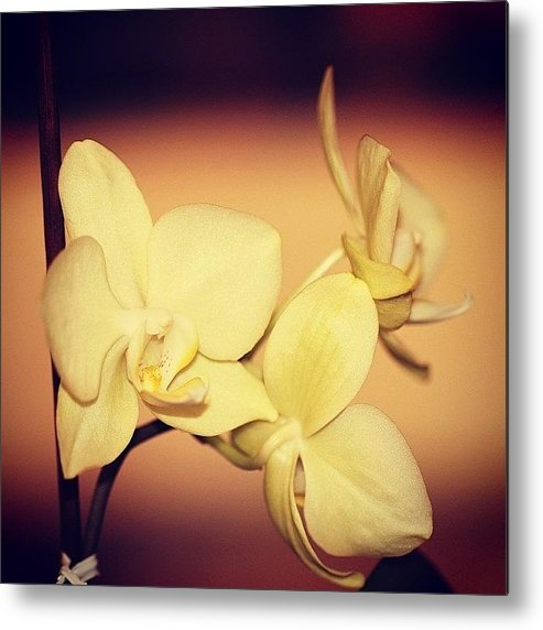 Flower Metal Print featuring the photograph White Orchid by Luisa Azzolini