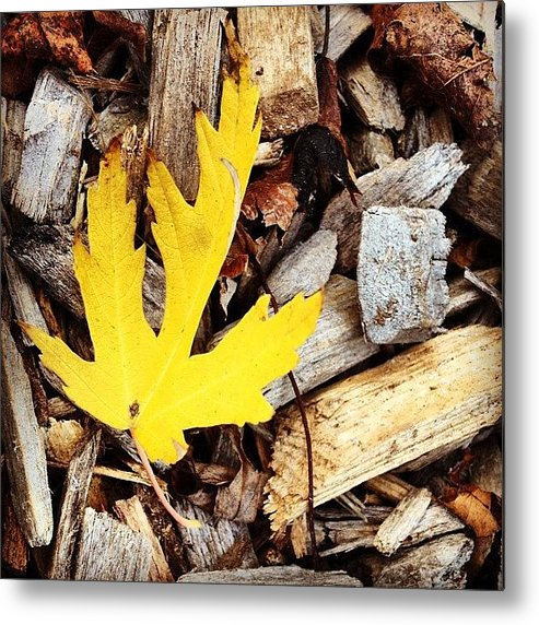 Leaf Metal Print featuring the photograph Yellow Leaf by Christy Beckwith