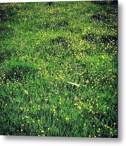 Buttercups Metal Print featuring the photograph Buttercups by Nic Squirrell
