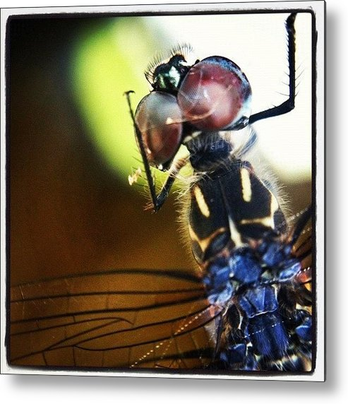 Rcspics Metal Print featuring the photograph Dragonfly In Web by Dave Edens