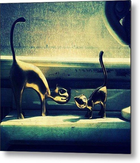 Navema Metal Print featuring the photograph Kitty Cats by Natasha Marco