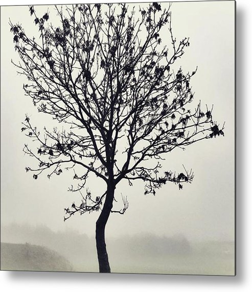 Tree Metal Print featuring the photograph Another Walk Through The by John Edwards