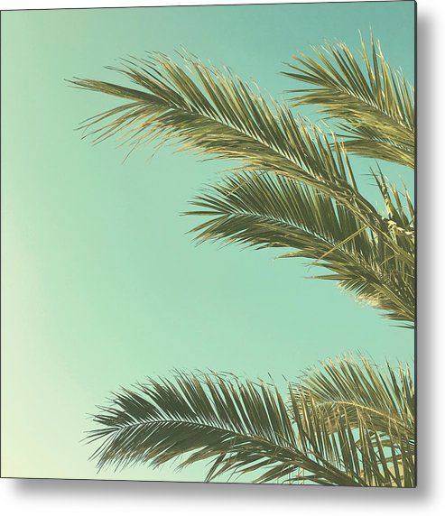 Palm Trees Metal Print featuring the photograph Autumn Palms II by Cassia Beck