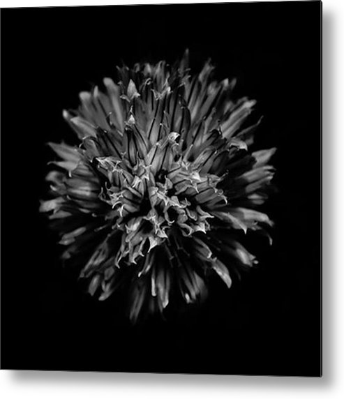 Bnw_focus_on Metal Print featuring the photograph Backyard Flowers. Bnw by Brian Carson