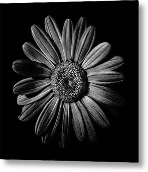 Flowersinframe_ Metal Print featuring the photograph Backyard Flowers.  #flowers by Brian Carson