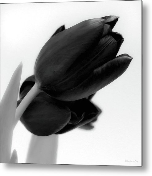 Tulips Metal Print featuring the photograph Black Tulips by Wim Lanclus