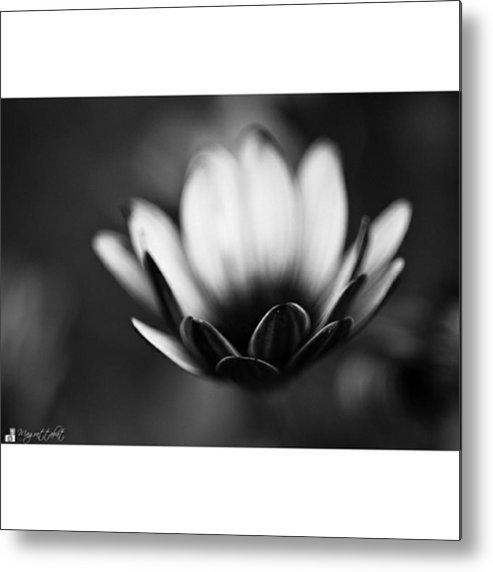 Plants Metal Print featuring the photograph #bw #closeup #petals #someyearsago by Mandy Tabatt