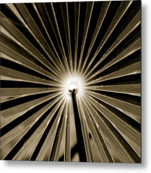 Beauty Flower Metal Print featuring the painting Concentric by Son Of the Moon