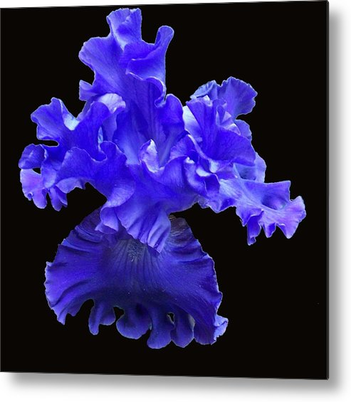 Flower Metal Print featuring the photograph Floating by Ellen B Pate