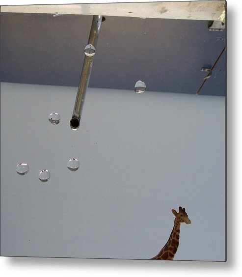 Giraffe Metal Print featuring the photograph In the Sink by Michelle Miron-Rebbe