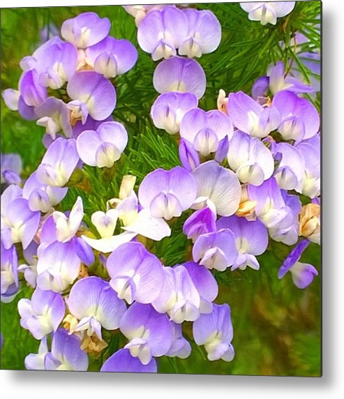 Plants Metal Print featuring the photograph Lovely #purple #flowers Beg Your by Shari Warren
