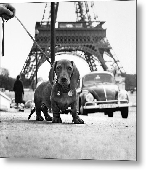 Eiffel Tower Metal Print featuring the photograph Milo mon Chien by Hans Mauli