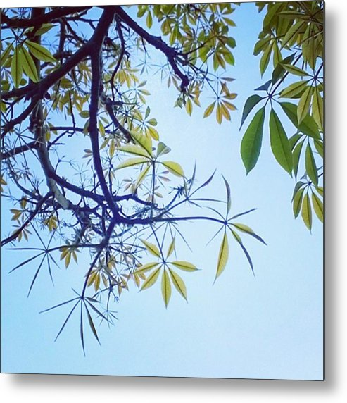Decor Metal Print featuring the photograph New #spring Leaves On My Tree In The by Shari Warren