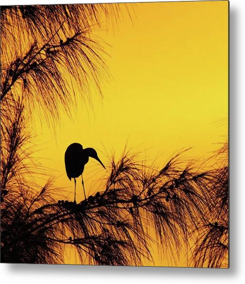 Egret Metal Print featuring the photograph One Of A Series Taken At Mahoe Bay by John Edwards