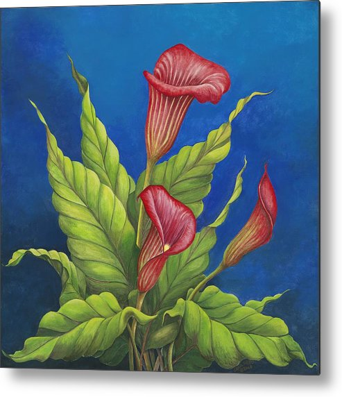 Red Calla Lillies On Blue Background Metal Print featuring the painting Red Calla Lillies by Carol Sabo