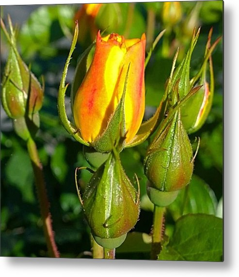 Plants Metal Print featuring the photograph #rosebuds Detail. Love The Mix Of by Shari Warren
