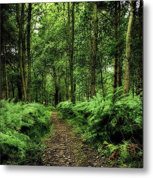 Nature Metal Print featuring the photograph Seeswood, Nuneaton by John Edwards