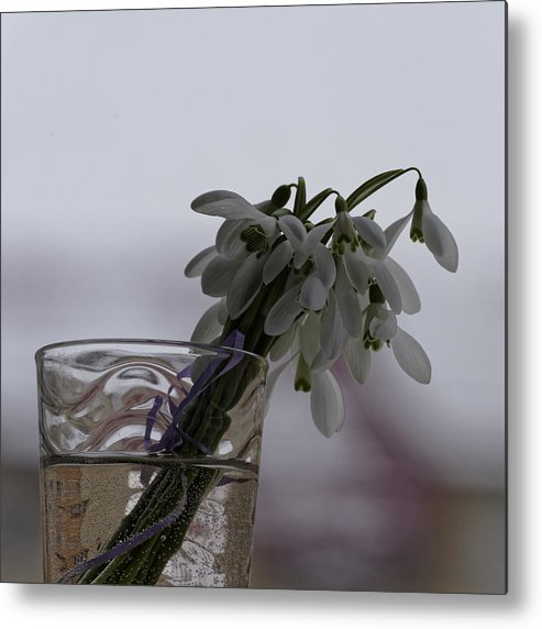 Arrangement Metal Print featuring the photograph Snowdrops Bouquet In The Glass by Adrian Bud