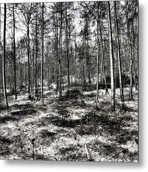 Stlawrenceswood Metal Print featuring the photograph St Lawrence's Wood, Hartshill Hayes by John Edwards