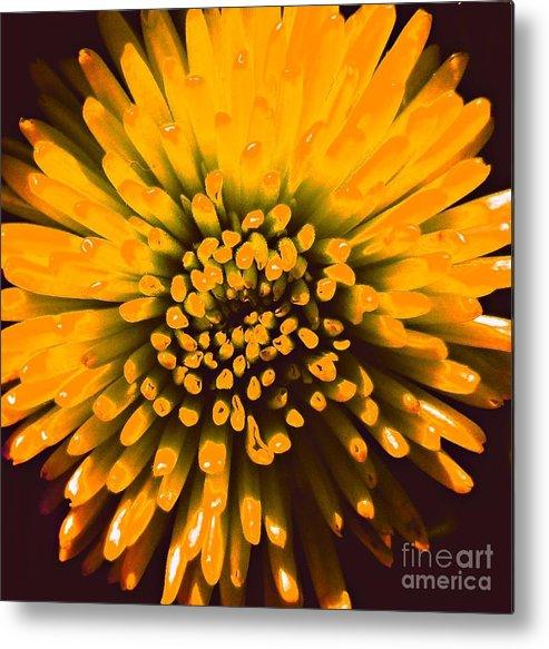 Flower Metal Print featuring the photograph Starburst Orange by JoNeL Art