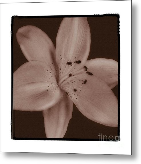 Lily Metal Print featuring the photograph Tiger Lily 8 by K Randall Wilcox