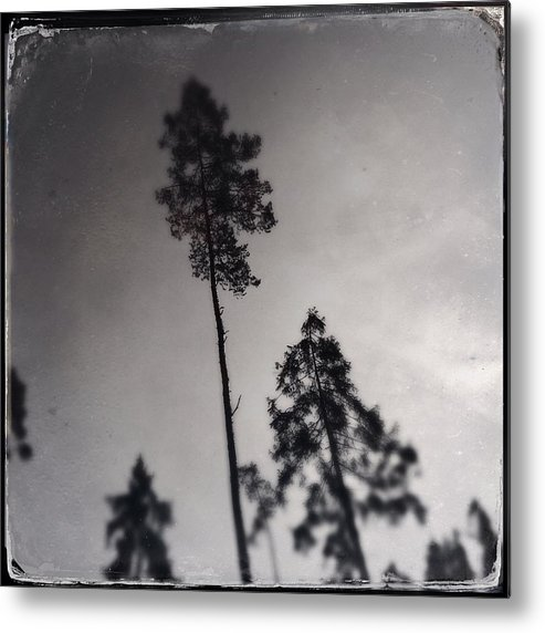 Tree Metal Print featuring the photograph Trees black and white wetplate by Matthias Hauser
