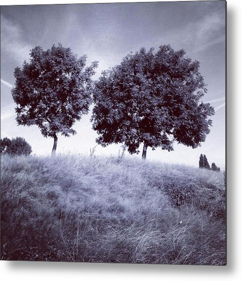 Snapseed Metal Print featuring the photograph Two Rowans the Cloddies, Nuneaton by John Edwards