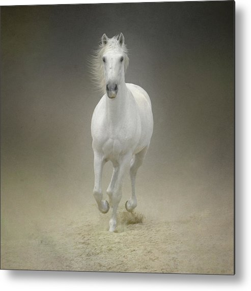 Horse Metal Print featuring the photograph White Horse Galloping by Christiana Stawski