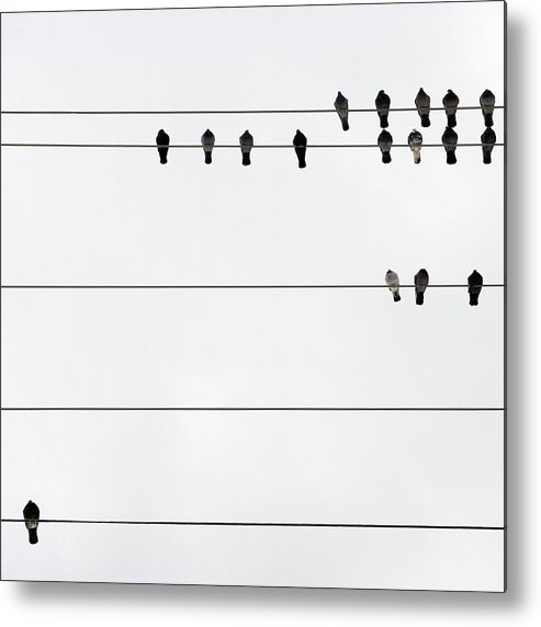 In A Row Metal Print featuring the photograph Birds On Electrical Wires by Kendall Mcminimy