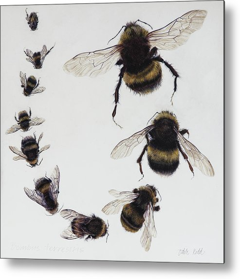 Nature Metal Print featuring the painting Bombus by Odile Kidd