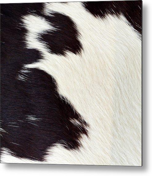 Animal Skin Metal Print featuring the photograph Designer Fur by Digiclicks