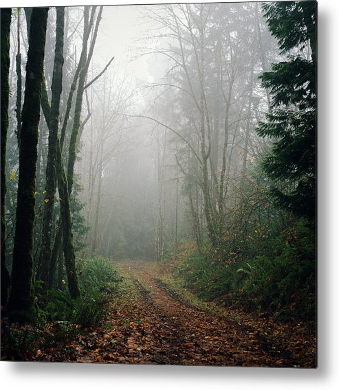Tranquility Metal Print featuring the photograph Dirt Road Leading Through Foggy Forest by Danielle D. Hughson