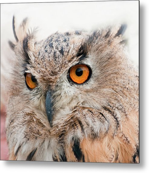 Alertness Metal Print featuring the photograph Eagle Owl by Tony Emmett