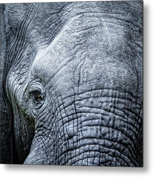 Animal Skin Metal Print featuring the photograph Elephants Eye Close-up by Brytta