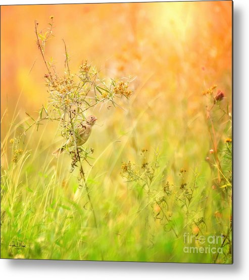 Aves Metal Print featuring the photograph Field Sparrow by Heather Hubbard