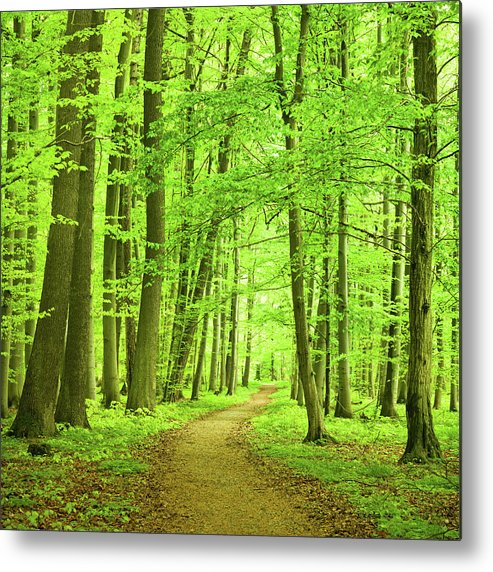 Curve Metal Print featuring the photograph Forest Path by Nikada