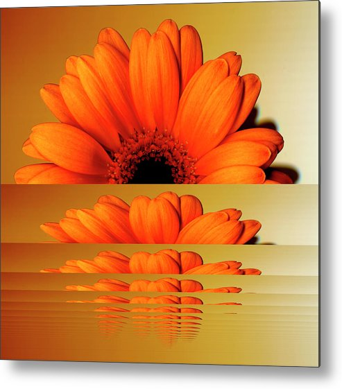 Orange Color Metal Print featuring the digital art Gerbera Flower As Rising Sun by Eversofine