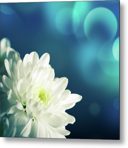 Easter Metal Print featuring the photograph Gerbera by Jeja