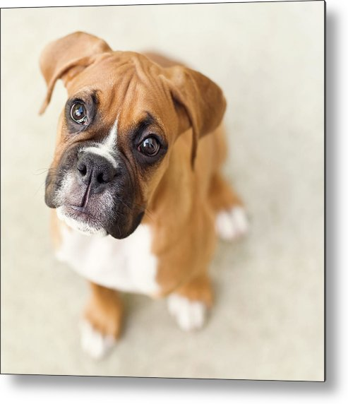 Pets Metal Print featuring the photograph Innocence by Jody Trappe Photography
