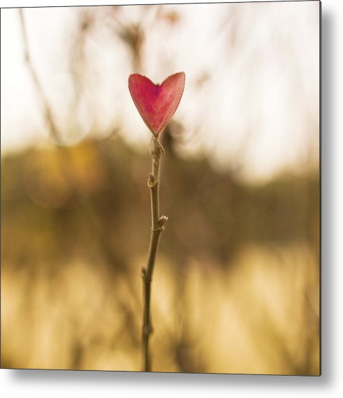 Outdoors Metal Print featuring the photograph Leaf In Heart Shape by Twomeows